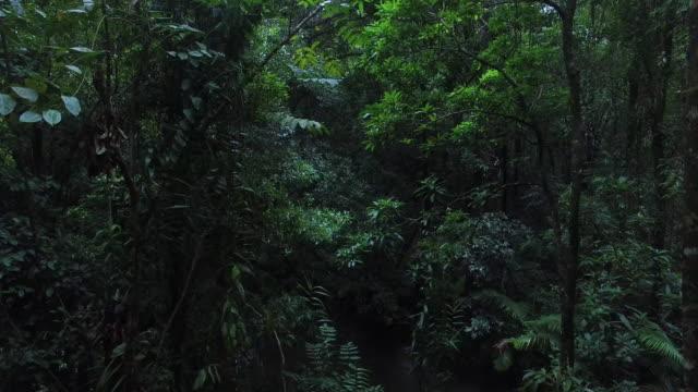 a drone shot inside a jungle - saftig bildbanksvideor och videomaterial från bakom kulisserna