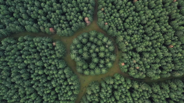 drone shot looking down and moving down towards a strange forest, netherlands - nature stock videos & royalty-free footage