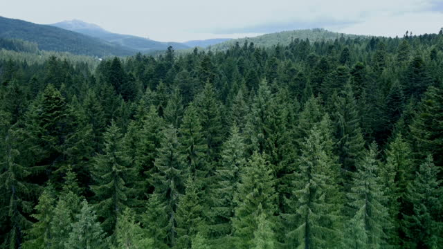 drone shot moving downwards over bavarian forest - evergreen stock videos & royalty-free footage