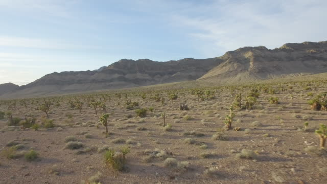 drone shot of a desert landscape in nevada with joshua trees - nevada stock videos & royalty-free footage