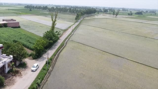 drone shot of a lone car driving past rice fields and a large home in punjab india - punjab india stock videos and b-roll footage