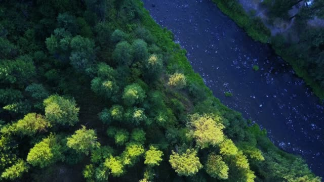 vídeos de stock e filmes b-roll de drone shot of bridge creek wildlife area, oregon - árvore de folhas perenes