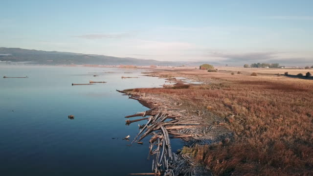 drone shot of calm lake along estuary shoreline in autumn with many driftwood logs at sunrise. - flathead lake stock videos and b-roll footage