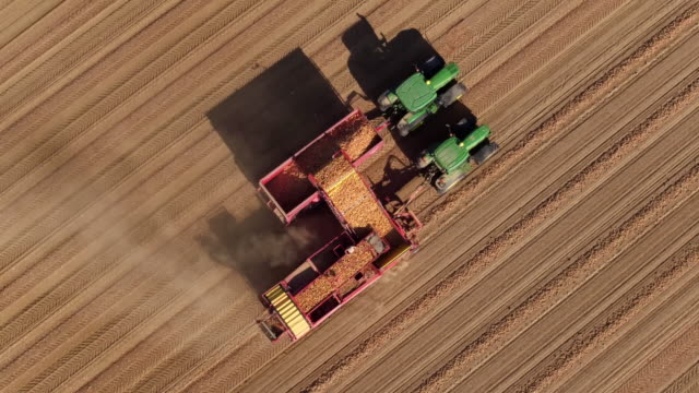 drone shot of combine harvester collecting potatoes in field - raw potato stock videos & royalty-free footage