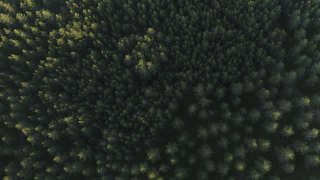 drone shot of forest in norway - silence stock videos & royalty-free footage