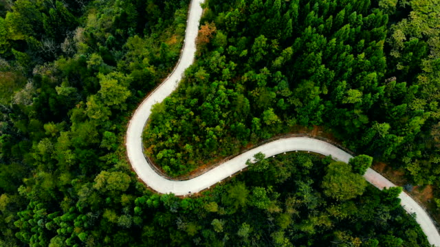 drone shot of forest road - named wilderness area stock videos & royalty-free footage
