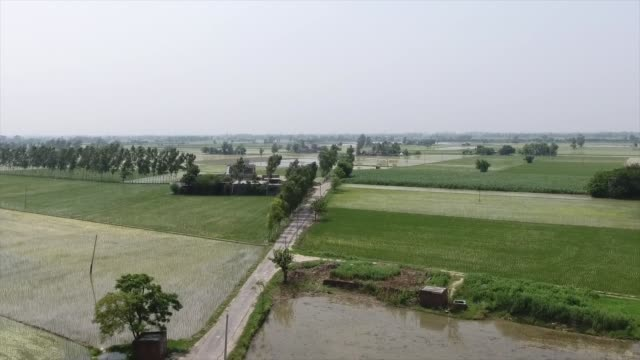 drone shot of green rice fields in punjab india - punjab india stock videos and b-roll footage