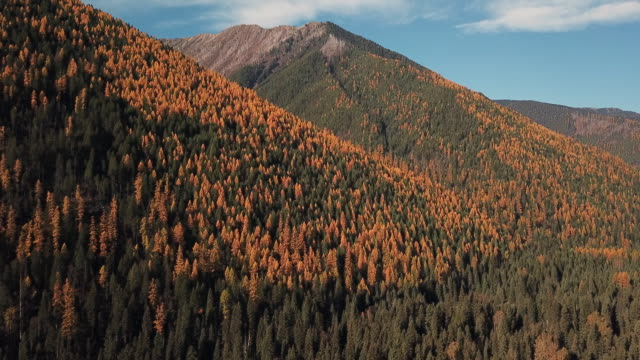 vídeos y material grabado en eventos de stock de drone shot of mountains and evergreen forest with autumn colored leaves showing in tamarack trees. - pinaceae