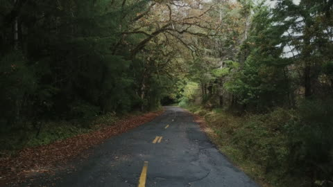 drone shot of mysterious lush moss covered forest and empty paved rural road with autumn leaves along edge of road way. - moos stock-videos und b-roll-filmmaterial