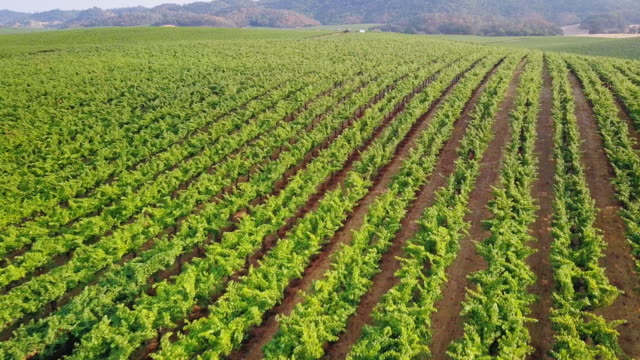 drone shot of northern california vineyards - crop stock videos & royalty-free footage