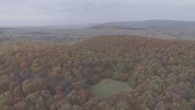 Drone shot of Romania's Hoia Baciu the Haunted Forest
