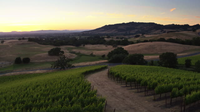 Drone Shot of Sonoma Vineyards Just After Sunset