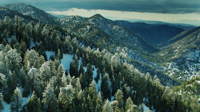 サンガブリエル山脈の向こうに雪と劇的な風景で曲がった木々のドローンショット - エンジェルス国有林点の映像素材/bロール