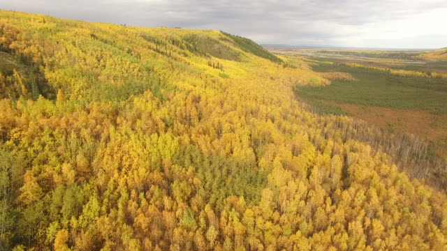 drone shot of trees in forest against sky during autumn at denali national park - denali national park stock videos & royalty-free footage