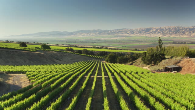 drone shot of vineyards, farms and barren mountains in monterey county, california - monterey county stock videos and b-roll footage