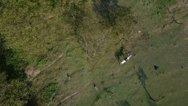 stockvideo's en b-roll-footage met drone schot van vrouw leidt wit paard door rein op een veld - alleen één mid volwassen vrouw