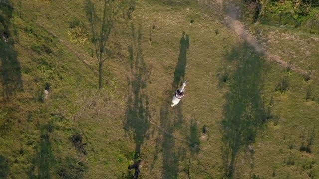 stockvideo's en b-roll-footage met drone schot van vrouw rijden wit paard op een veld - alleen één mid volwassen vrouw