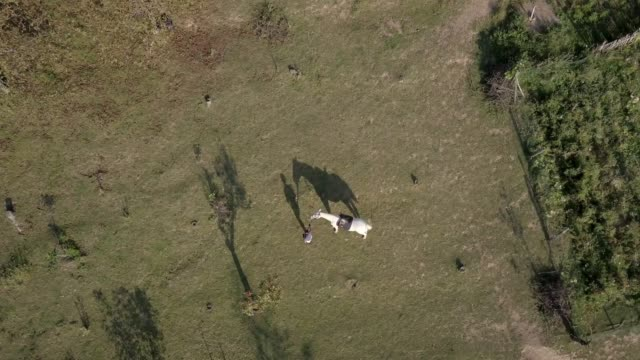 drone shot of woman walking by white horse after riding - ceppaia video stock e b–roll