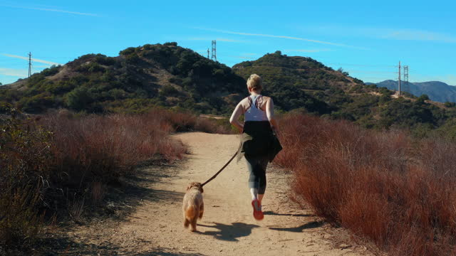 drone shot of woman walking her dog on the trails of la canada - b roll stock videos & royalty-free footage