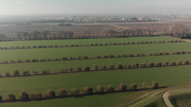 drone shot over farmland in winter towards padua city at dawn - smog video stock e b–roll