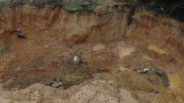 drone shot reveal of a pit where pigs infected with african swine fever are buried in longtan town, bobai county, guangxi province, china. - healthcare and medicine or illness or food and drink or fitness or exercise or wellbeing stock videos & royalty-free footage