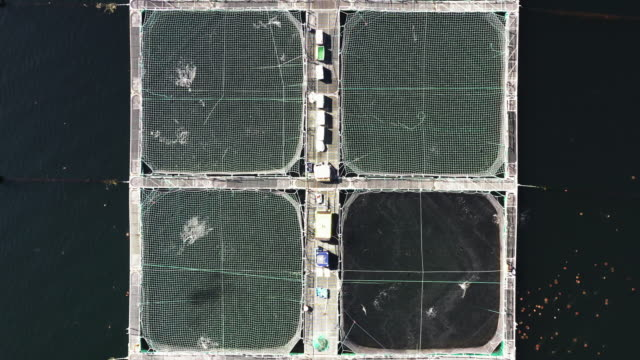 drone shot showing fish jumping in a section of a aquaculture farm, scotland, united kingdom - quadratisch komposition stock-videos und b-roll-filmmaterial