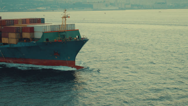 drone shots of dolphins are jumping in front of the cargo ship in istanbul bosphorus - cetacea stock videos & royalty-free footage