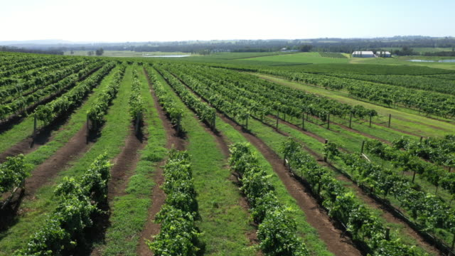 drone shots of various wineries in the hunter valley from close up and wide angles - wine stock videos & royalty-free footage