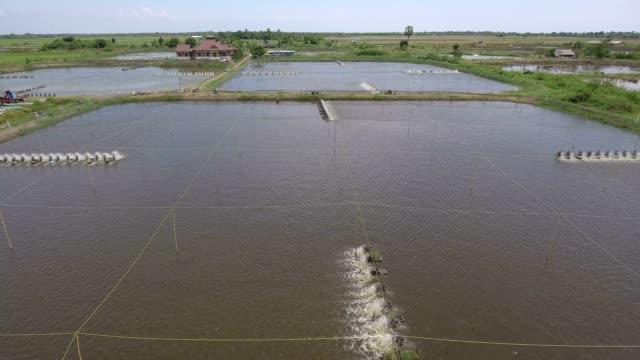 stockvideo's en b-roll-footage met drone garnalen boerderij - garnaal gerecht