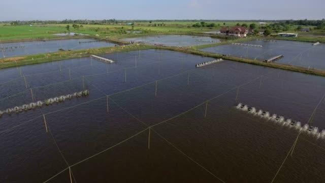 drone shrimp farm - mangrove tree stock videos & royalty-free footage
