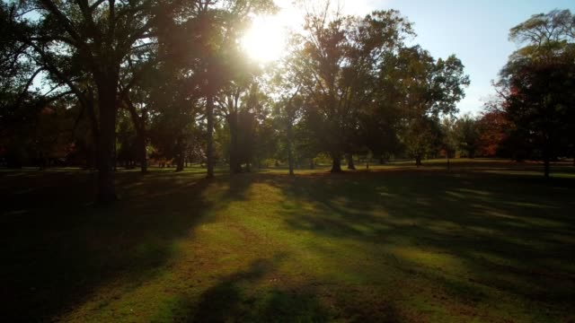 drone - sunlight through park trees - richmond virginia stock videos & royalty-free footage