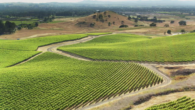 drone survey of lush vineyard - northern california stock videos & royalty-free footage