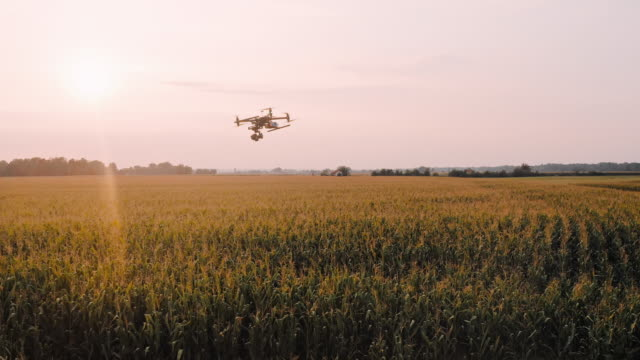 aerial drone take off on a field at sunset - taking off stock videos & royalty-free footage
