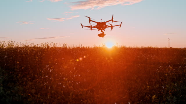 super slo mo drone take off over a field of canola at sunset - 40 seconds or greater stock videos & royalty-free footage