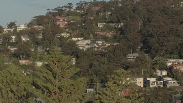 vídeos de stock e filmes b-roll de drone up over surf club building and rise up close up norfolk island pine to houses on newport ridge set amongst trees and back down repeated wider... - maça