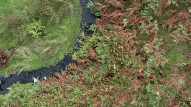 vídeos y material grabado en eventos de stock de vídeo de drones de una pequeña corriente en la escocia rural - johnfscott