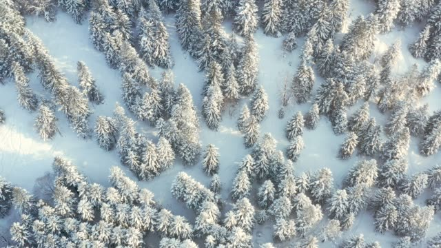 drone video of snow forest, hokkaido, japan - 冬点の映像素材/bロール