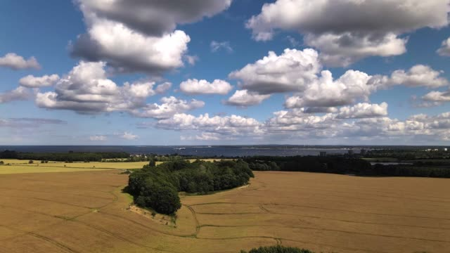 drone video of sunlit wheat fields in summer with blue sky and white clouds - tina terras michael walter stock videos & royalty-free footage