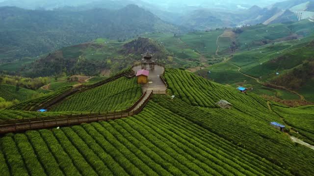 drone video of the yunfu tea terraces in the cyunfu mountains in guizhou province. cyunfu mountain has ten thousand acres of tea. - landscape scenery stock videos & royalty-free footage