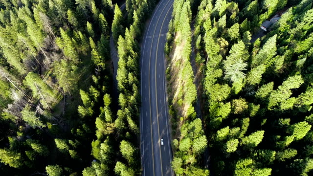 Drone view following Highway in the Woods Northern California Sierra Nevada Mountains thick Forest aerial drone view