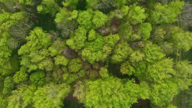 vídeos de stock e filmes b-roll de drone view from above of trees moving in the wind - oscilar