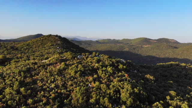 drone view in forest - nature reserve stock videos & royalty-free footage