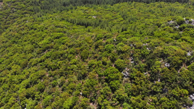 drone view in forest - named wilderness area stock videos & royalty-free footage