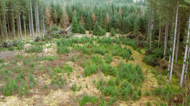 drone view of a new area of trees in a forest - forestry industry stock videos & royalty-free footage