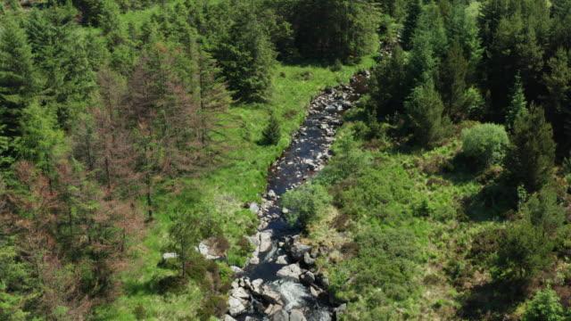 vidéos et rushes de vue de drone d'un petit ruisseau coulant à travers une zone de forêt dans le sud-ouest de l'ecosse - remote location