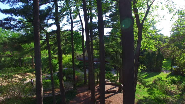 vídeos de stock, filmes e b-roll de drone view of a wood area in a public park, toronto, canada - pinaceae
