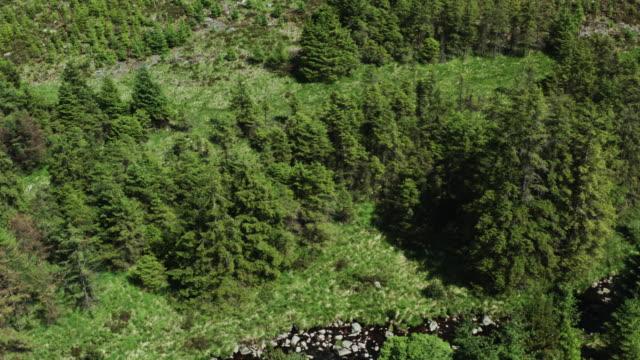 vidéos et rushes de vue de drone d'une zone de forêt à côté d'un petit ruisseau dans le sud-ouest de l'ecosse - remote location