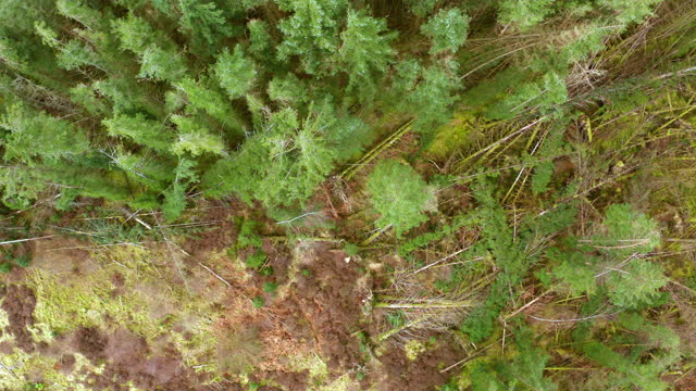 drone view of an area of scottish pine forest - galloway scotland stock videos & royalty-free footage