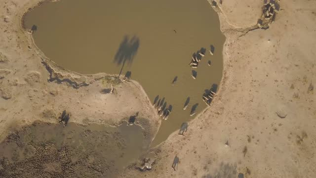 drone view of elephants drinking water in botswana - pull out camera movement stock videos & royalty-free footage