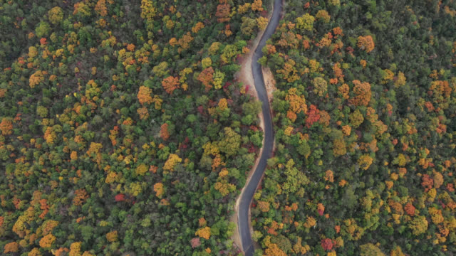 drone view of fall foliage and a mountain road - thoroughfare stock videos & royalty-free footage